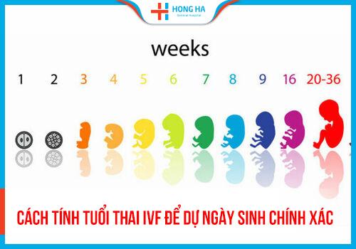 Cách tính tuổi thai IVF