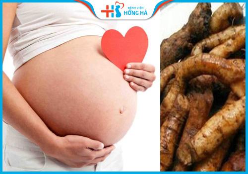 cây củ gai dùng cho phụ nữ mang thai