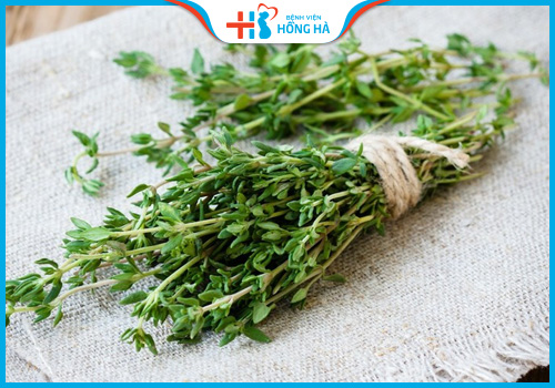 cỏ xạ hương gây vô sinh