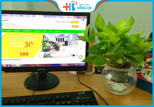 đặt cây xanh trên bàn máy tính