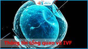 IVF là gì? 5 bước cơ bản trong quy trình IVF hiện nay