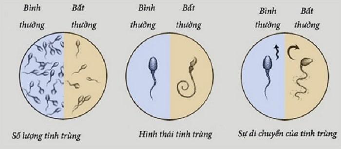 chức năng sinh sản ở nam giới