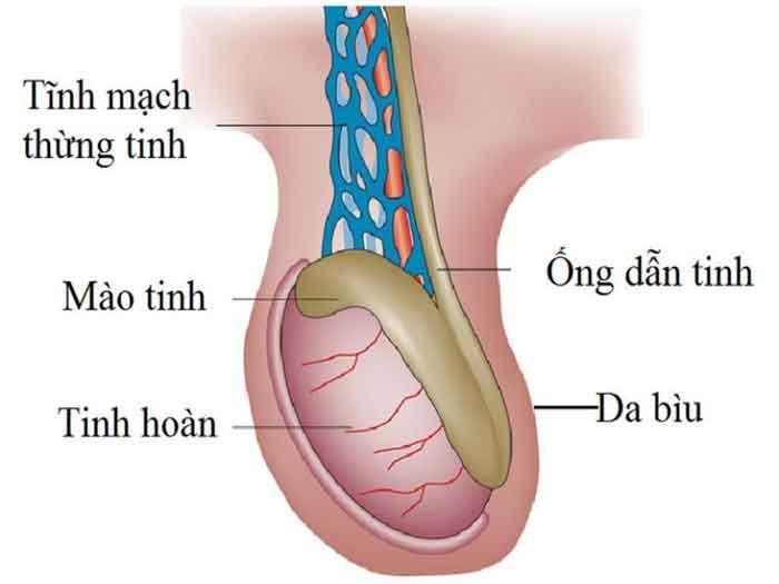 Các bệnh lý ở tinh hoàn làm giảm chất lượng tinh trùng